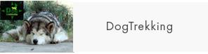 7-dogtreking
