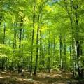 featured image ZAWIADOMIENIE o wyłożeniu do publicznego wglądu projektu Uproszczonego planu urządzenia lasów