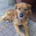 featured image Znaleziono psa!