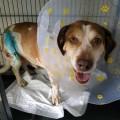 featured image Pilnie poszukujemy właściciela psa – wrócił do domu