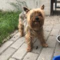 featured image Zabłąkany pies – wrócił do domu