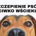 featured image Szczepienia przeciwko wściekliźnie